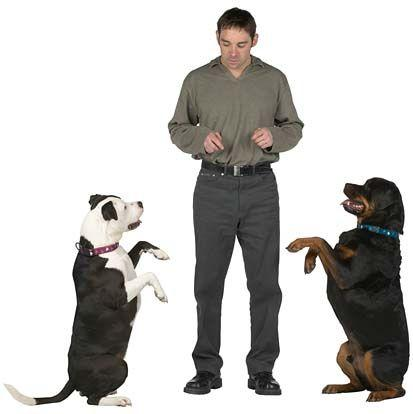 best online dog training program
